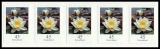FRG MiNo. 3376 ** Permanent series Flowers: Water Lily, self-adh., stripe, MNH